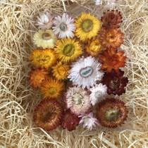 wedding photo - Dried StrawFlowers, Real Flowers, Wedding Decorations, Centerpieces, Craft Supplies, Floral Biodegradable, Flower Girl, Floral Crown, Table
