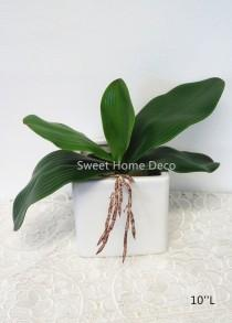 wedding photo - JennysFlowerShop Gel Coated Phanaenopsis Orchid Artificial Greenery Leaf with Realistic Roots