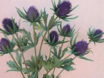 wedding photo - Artificial thistle purple teasel cone flower ideal for bouquets, wild flower displays, buttonholes and wedding corsages.