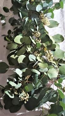 wedding photo - Silver Dollar Eucalyptus Stems in Bundles of 10, Wedding Flowers, Wedding and Event Greenery,Fresh Eucalyptus,DIY Wedding Decor, Floral Stem