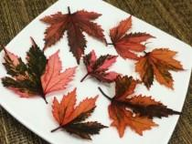 wedding photo - Edible Hibiscus Leaf