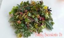 wedding photo - 200 Assorted Succulent Cuttings