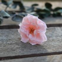 wedding photo - Preserved wild rose on hair clips for bridal or bridesmaid hairstyle, natural preserved flower
