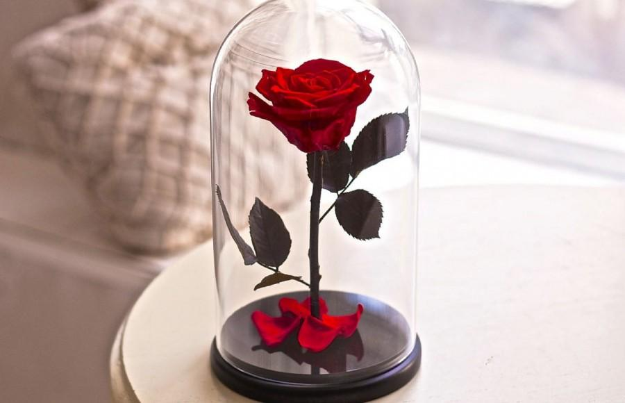 Beauty And The Beast Rose Forever Enchanted Belle In Gl Preserved Roses Five Year Lasting